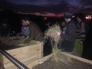Les étudiants recouvrent la terre de foin  pour favoriser la présence de micro-organismes