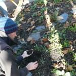 La terre du jardin est riche : preuve en est le mouron qui pousse dessus mais elle n'est pas habitée de bestioles, qui sont une garantie de bonne santé : on va y remédier !