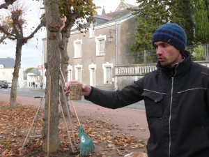 Samuel montre la quantité de méteil bio qui en poussant va protéger  et préparer le sol pour le printemps